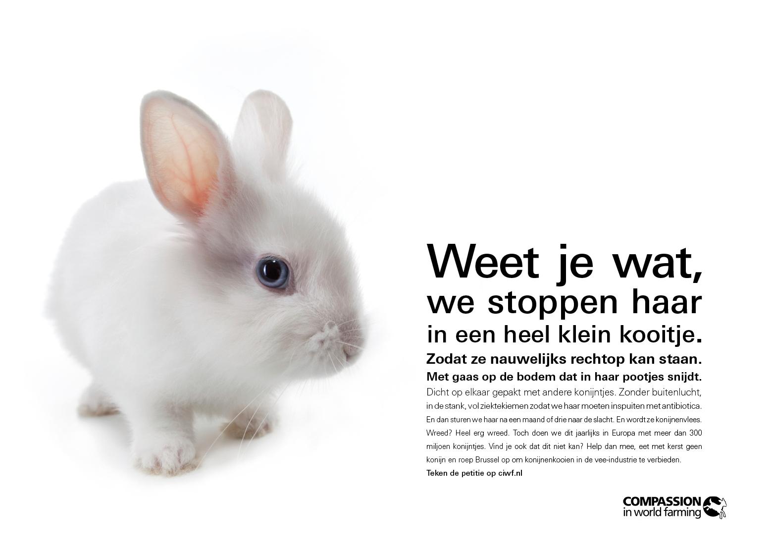 Verborgen konijnenleed met kerst op NS stations - Hart voor Dieren