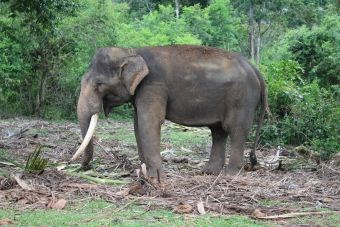 Olifanten verliezen hun thuis