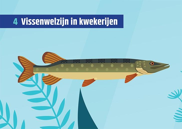 Kaart met een afbeelding van een vis en de titel 'Vissenwelzijn in kwekerijen'