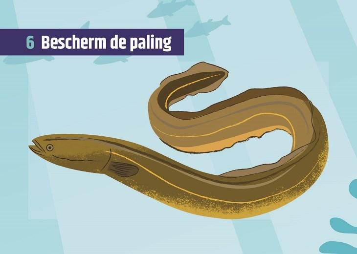 Week 6 Bescherm de paling