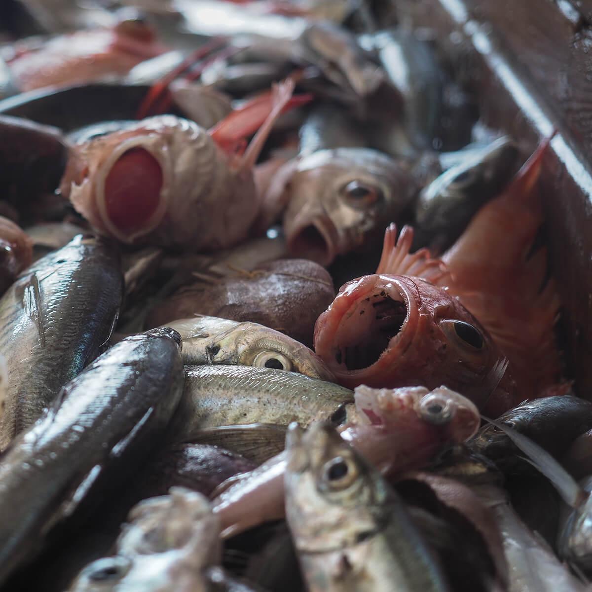 Stikkende vissen